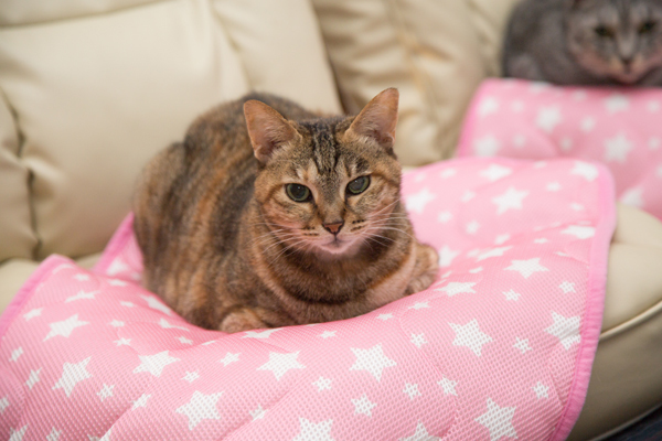 にゃんず日記と登場猫人たちの紹介_d0355333_12281781.jpg