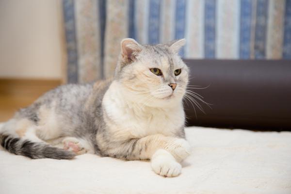 にゃんず日記と登場猫人たちの紹介_d0355333_16293422.jpg