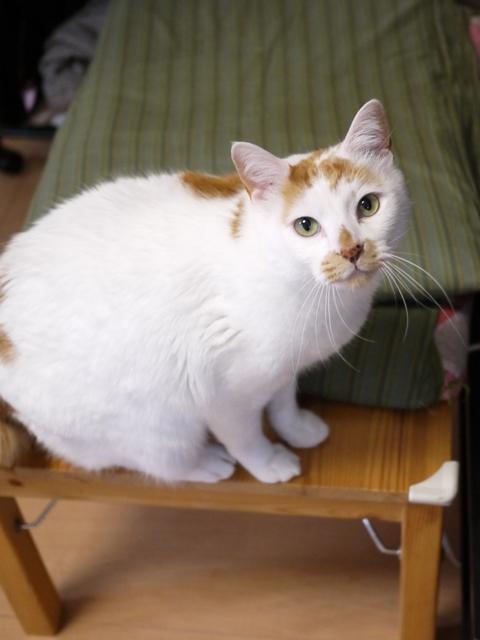 猫のお留守番 咲くん編。_a0143140_2353990.jpg