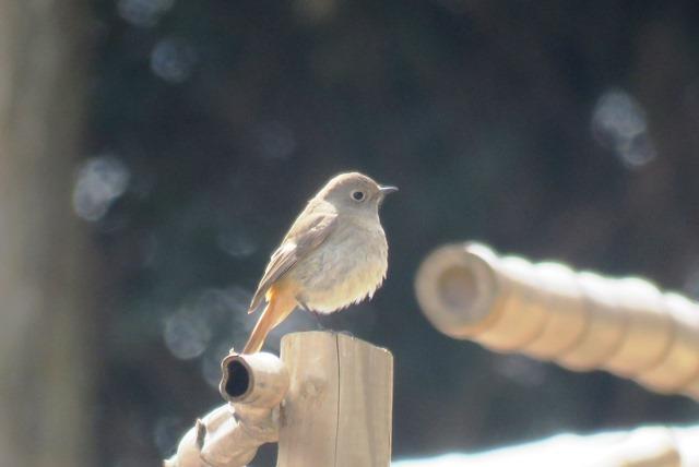 野鳥トレ77 森林植物園_b0227552_19435560.jpg