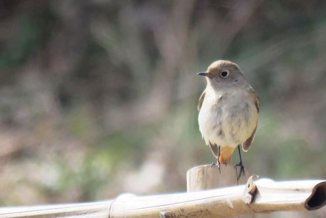 野鳥トレ77 森林植物園_b0227552_19440204.jpg