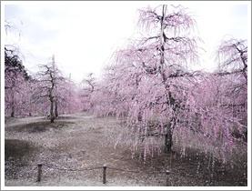 鈴鹿の森庭園_b0142989_18484171.jpg