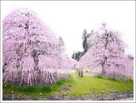 鈴鹿の森庭園_b0142989_184896.jpg