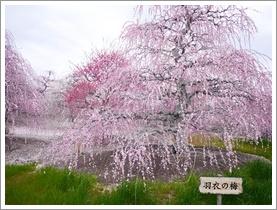 鈴鹿の森庭園_b0142989_1854884.jpg