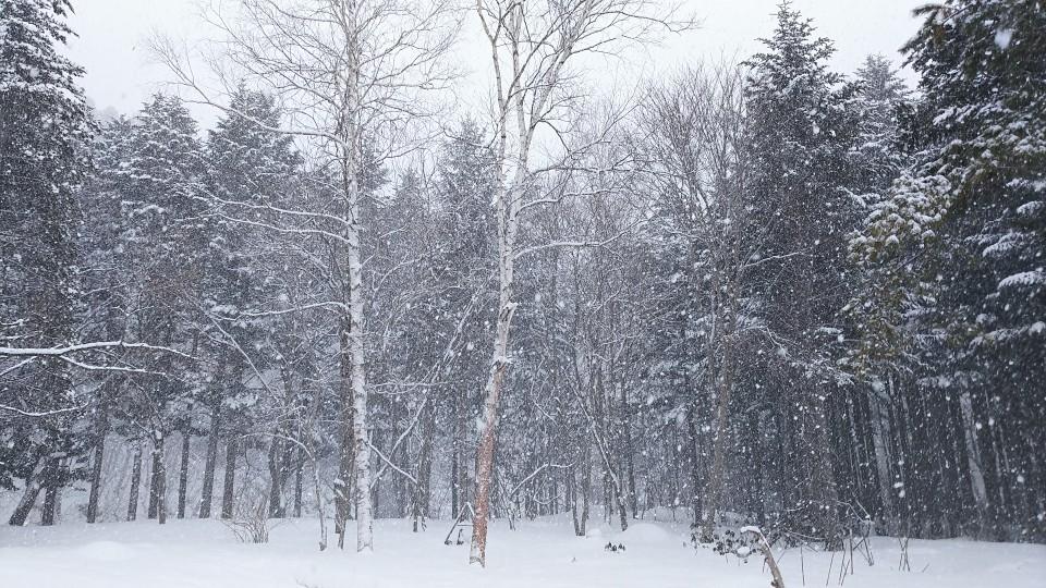 雪・・・降りました。_b0343293_11090915.jpg