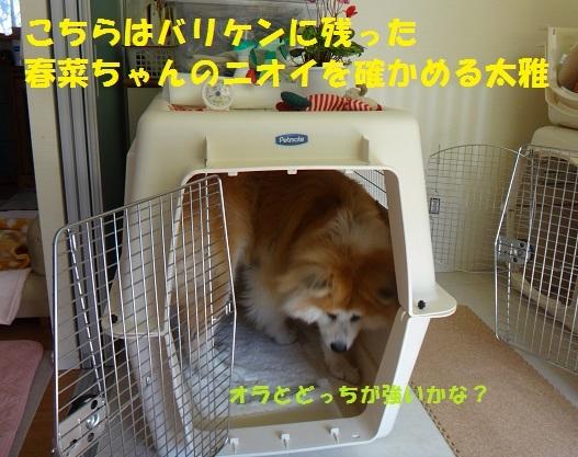 f0121712_01371493.jpg