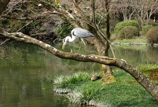 京都府立植物園 春の花_e0048413_20142262.jpg