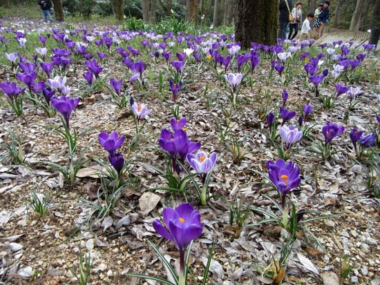 京都府立植物園 春の花_e0048413_20143706.jpg