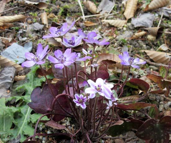 京都府立植物園 春の花_e0048413_20150112.jpg