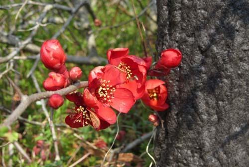 京都府立植物園 春の花_e0048413_20150588.jpg
