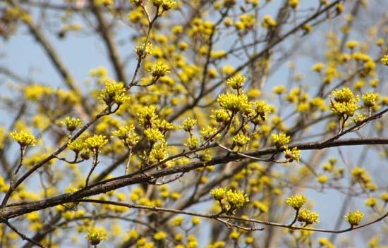 京都府立植物園 春の花_e0048413_20151163.jpg