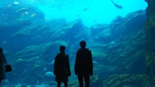 水族館へ。_f0157414_23551109.jpg