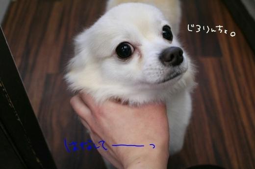 b0130018_22400157.jpg