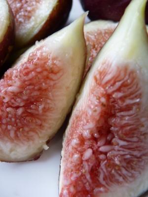 甘熟イチジク 確実に実る弱い枝を芽吹かせ育てるための匠の剪定作業2020_a0254656_17400549.jpg
