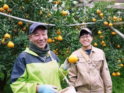 甘熟イチジク 匠の剪定作業2017 枝の下から新しい芽を芽吹かせます!_a0254656_18325777.jpg