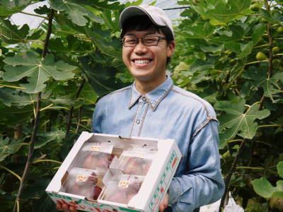 甘熟イチジク 匠の剪定作業2017 枝の下から新しい芽を芽吹かせます!_a0254656_18513528.jpg