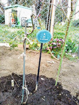 2017年3月 駒場ばら園ゆかりの新しいバラ苗の植栽〜バラの小径 _a0094959_04140213.jpg