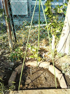 2017年3月 駒場ばら園ゆかりの新しいバラ苗の植栽〜バラの小径 _a0094959_04140690.jpg