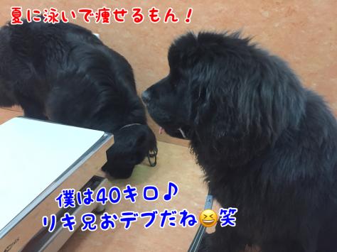 c0343364_17330144.jpg