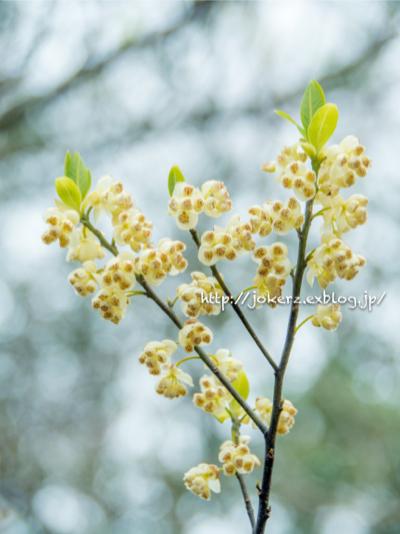 陽光桜_a0157091_18563325.jpg