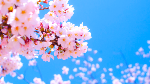 開花!_b0201492_10154165.png