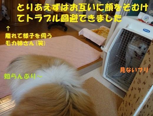 f0121712_15332907.jpg
