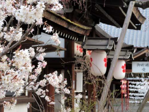平野神社 桃さくら_e0048413_21081459.jpg