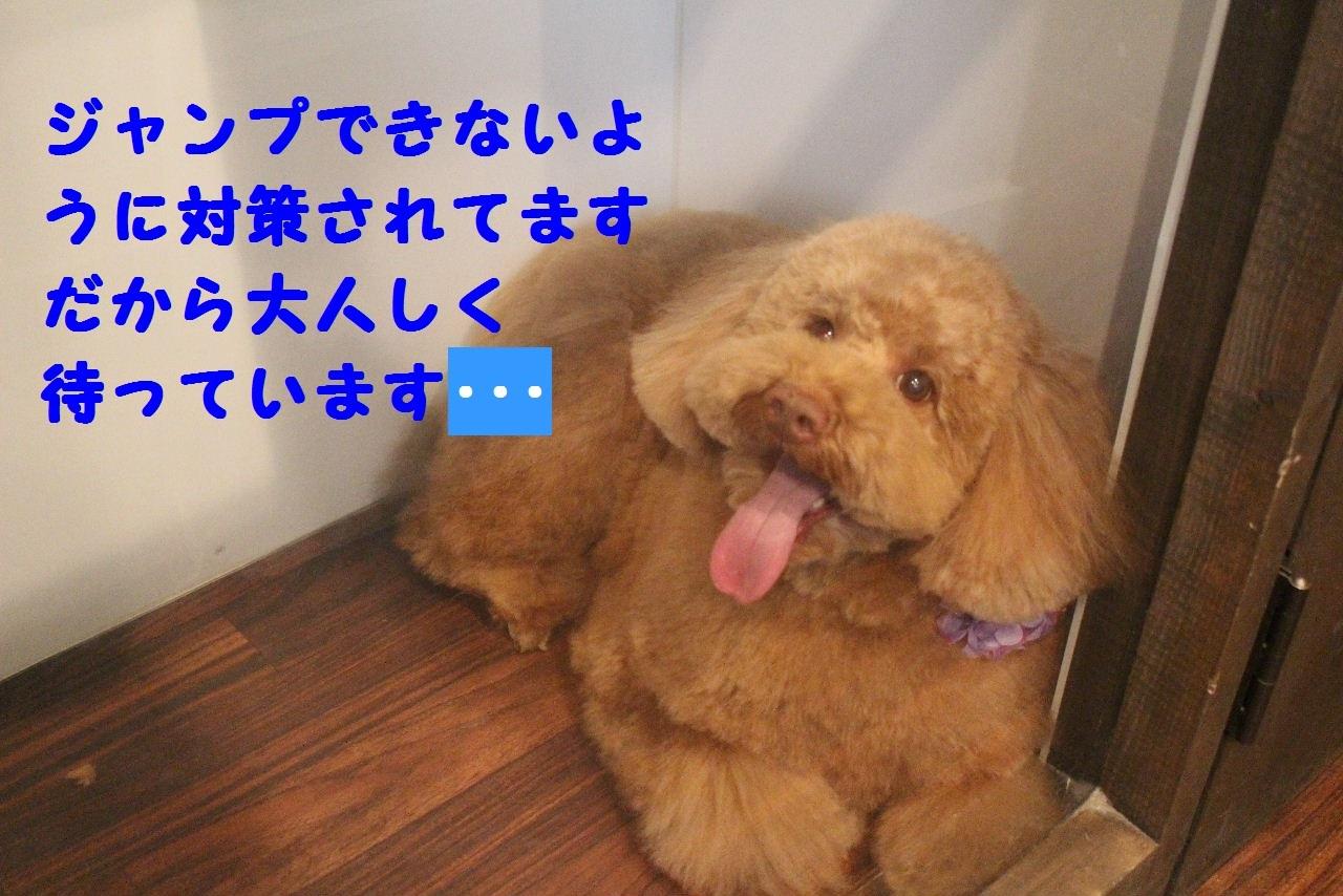 b0130018_09020340.jpg