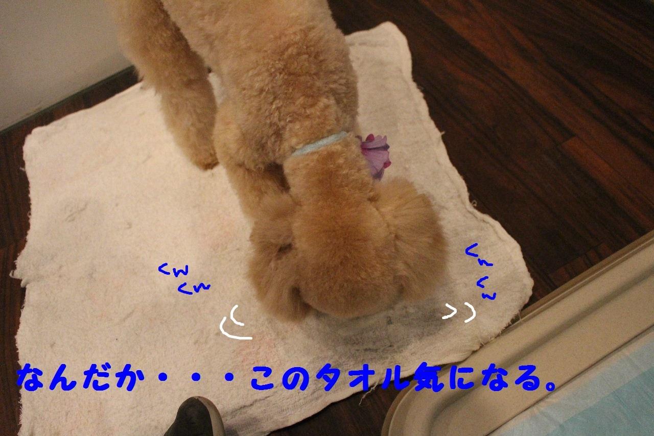b0130018_09105126.jpg