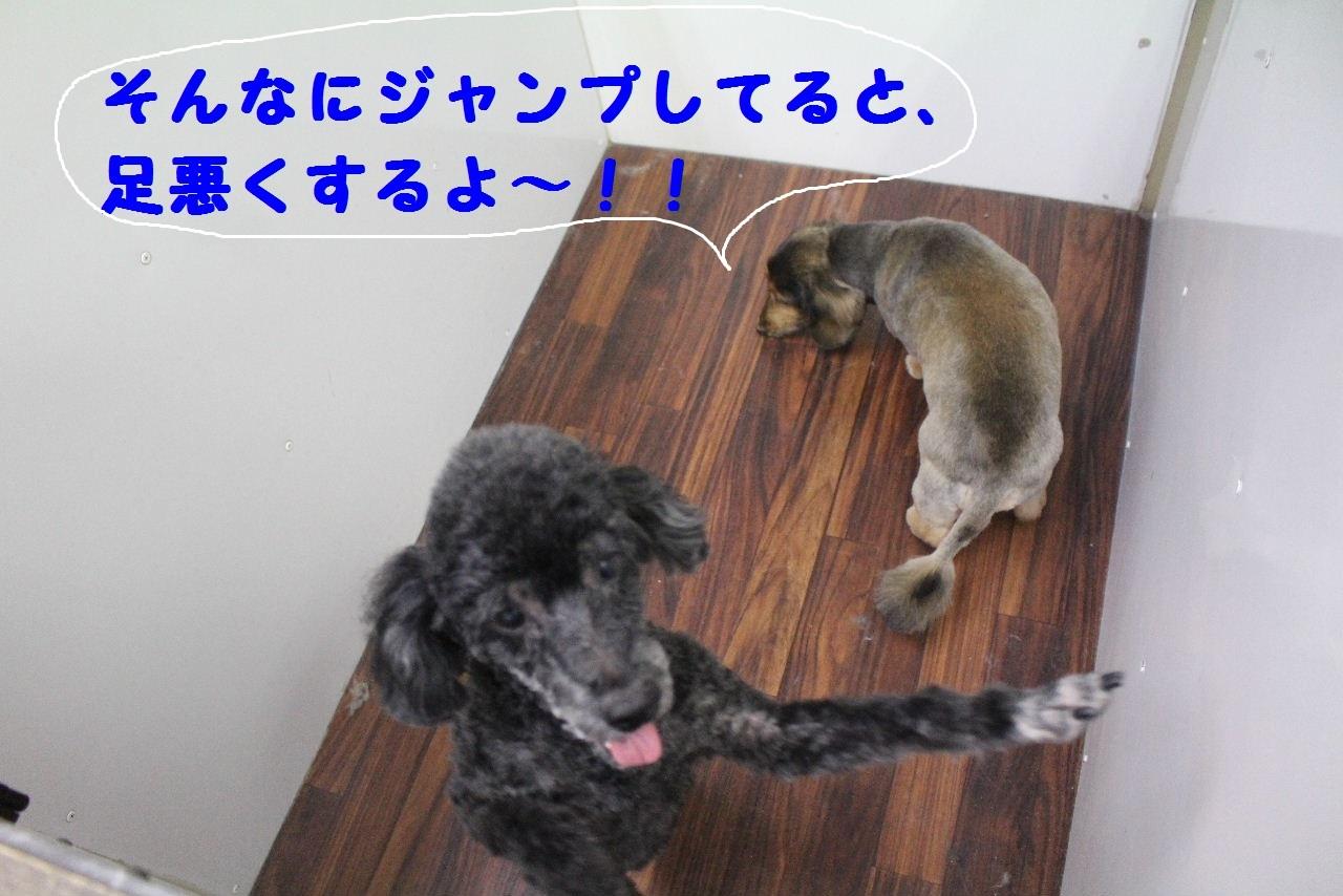 b0130018_09121569.jpg
