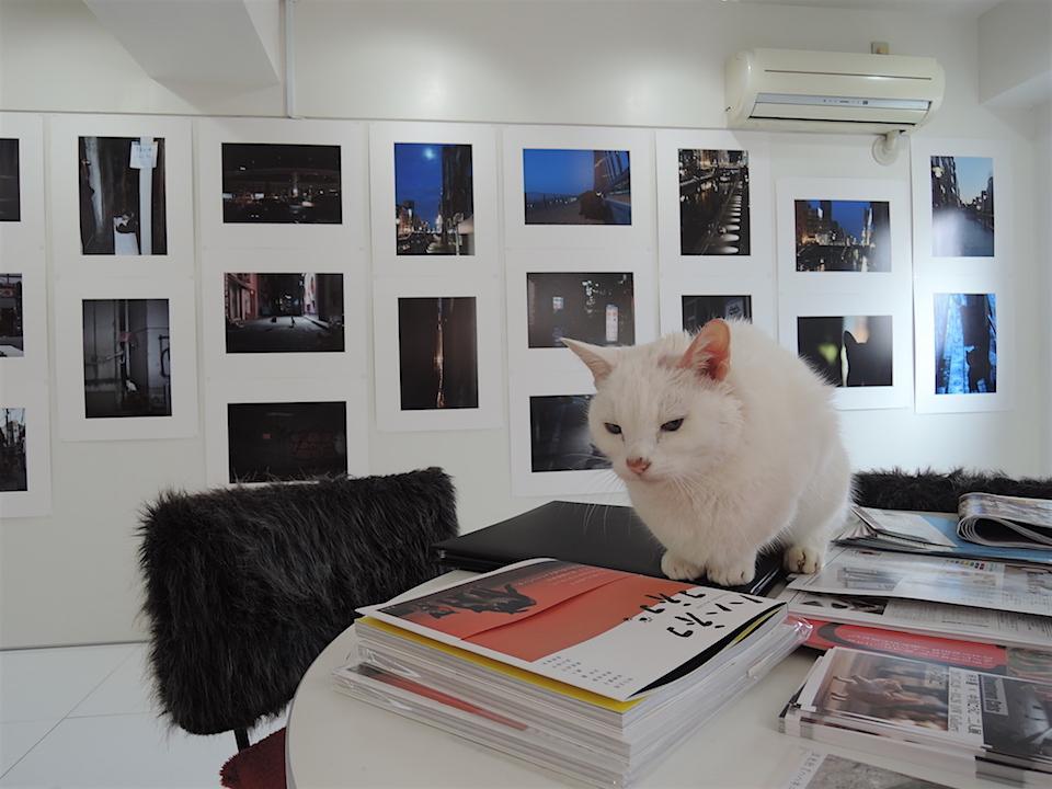 河井蓬「Downtown Cats」 × 中川こうじ「のらねこ」 は終了しました。_f0138928_1840735.jpg