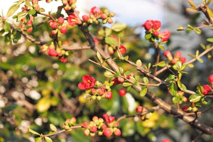 春、春、春花を_a0098746_17511097.jpg