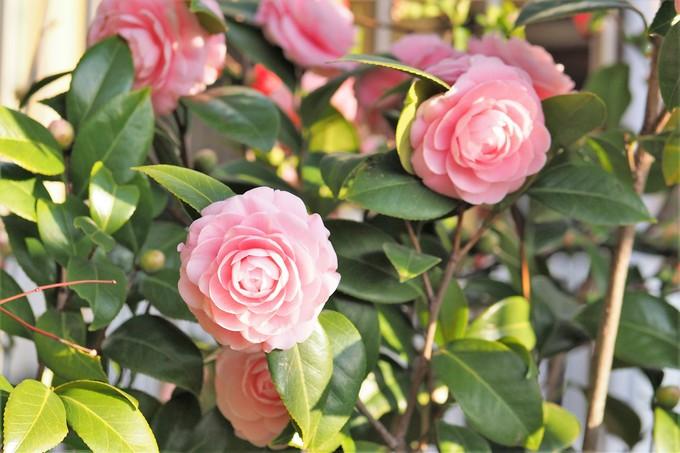 春、春、春花を_a0098746_17514181.jpg