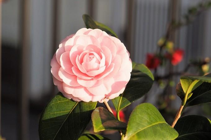 春、春、春花を_a0098746_17515928.jpg