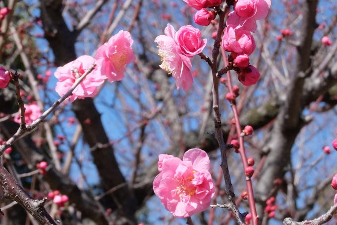 春、春、春花を_a0098746_17531011.jpg