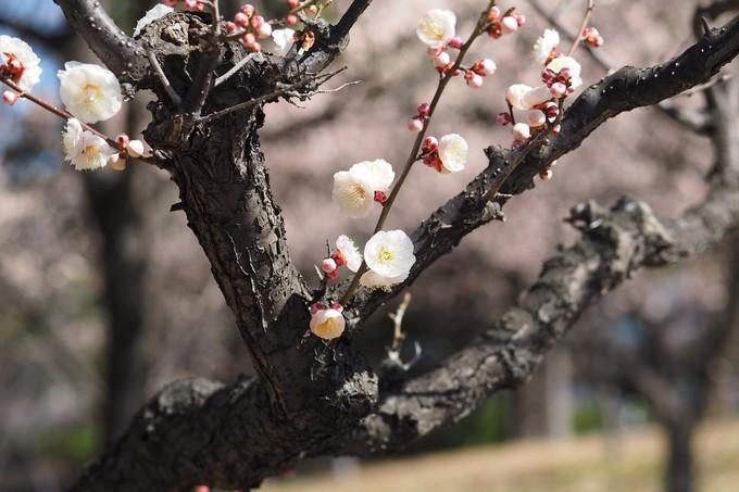 春、春、春花を_a0098746_17541829.jpg