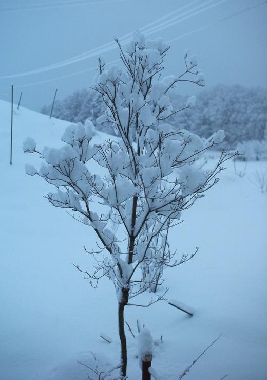 日陰は30cmくらいの積雪。_c0110869_110253.jpg
