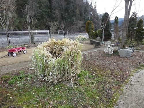 最近の庭仕事_e0365880_23045378.jpg
