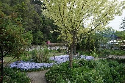 最近の庭仕事_e0365880_23073092.jpg