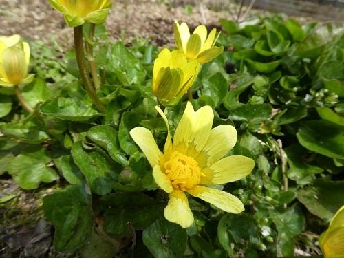 最近の庭仕事_e0365880_23280877.jpg