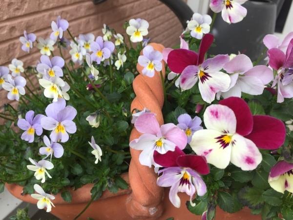 わが庭で毎年春に花を咲かせる植物たち_e0232798_07014511.jpg