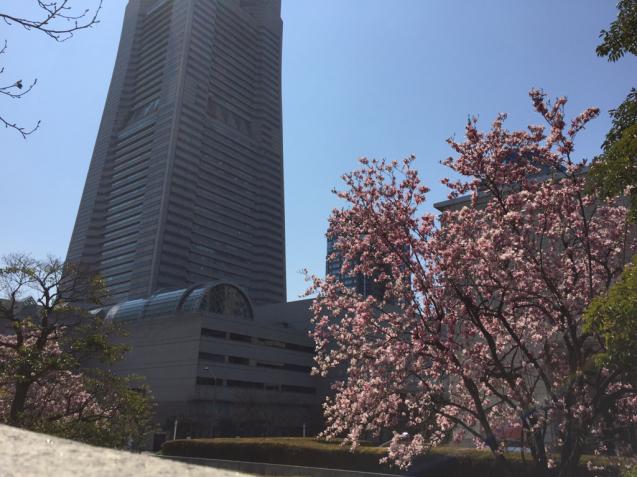 横浜みなとみらい in Spring_f0144003_12033771.jpg