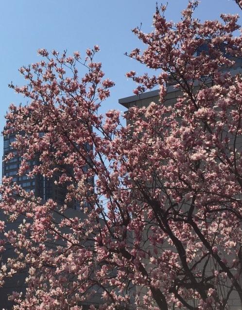 横浜みなとみらい in Spring_f0144003_12050341.jpg