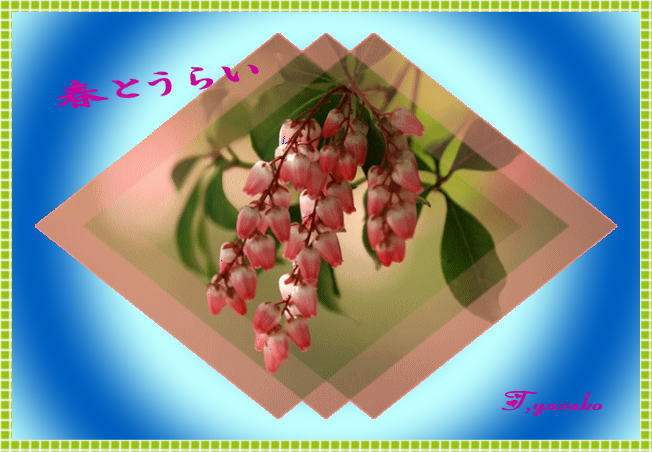 d0155321_11261141.jpg