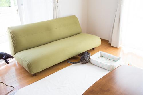 新しいソファがやってきた☆搬入編_d0355333_09102729.jpg