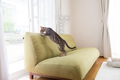 新しいソファがやってきた☆搬入編_d0355333_09103183.jpg