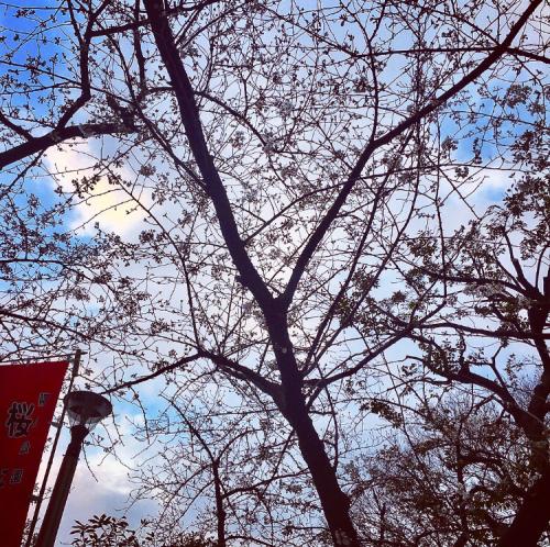公園電灯からの光線をカット_d0011635_18340883.jpg