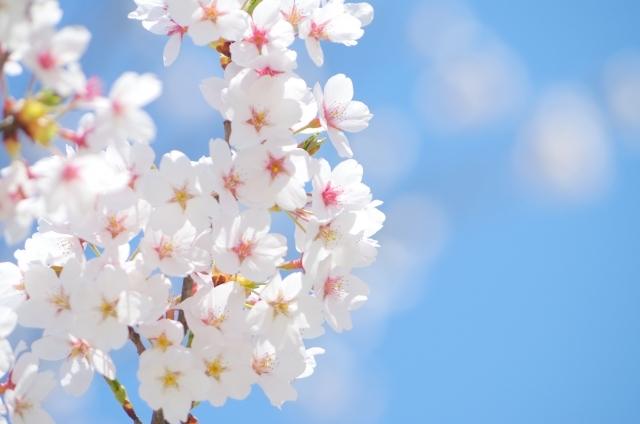 終わりとはじまりの季節~一番きれい~_b0298740_14185545.jpg