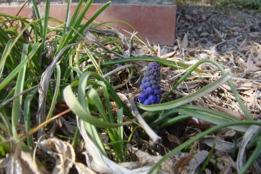 春集め_e0226943_23374400.jpg