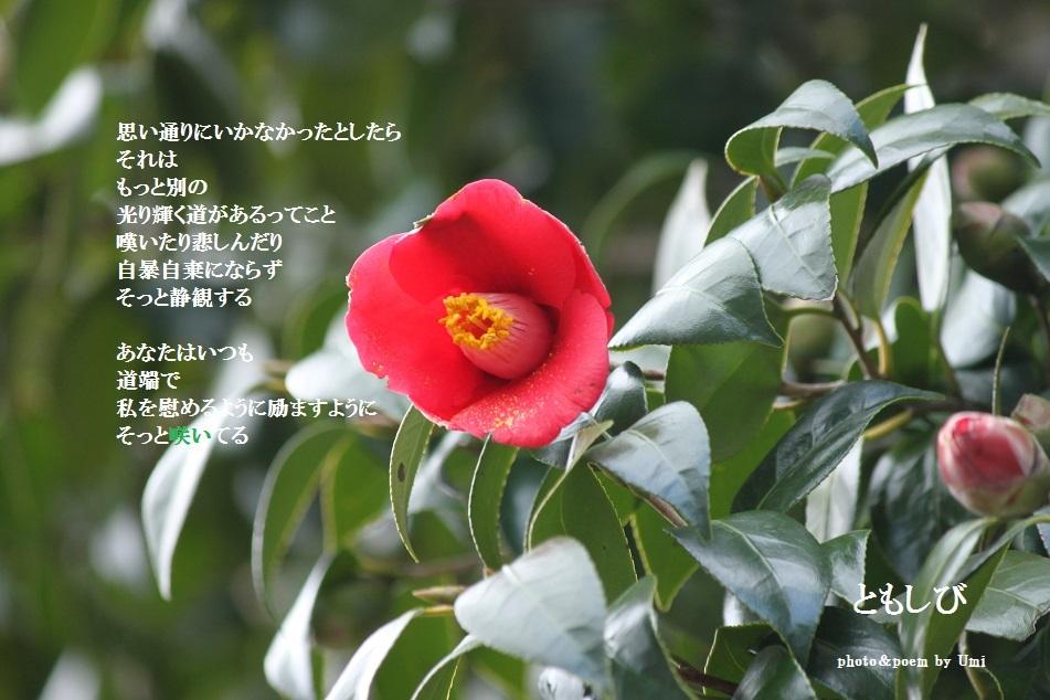 f0351844_17235678.jpg